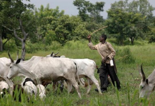 Governors Ban Open Grazing In South-West After Ondo Meeting
