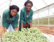 40,000 young people in Nigeria to benefit from Young Africa Works-IITA project training program