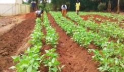 LAGOS AGRIPRENEURSHIP PROGRAMME 2020