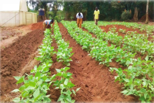 HOW TO APPLY FOR LAGOS AGRIPRENEUR PROGRAMME 2020 (LAP 2020)