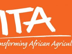 Job Vacancies At IITA
