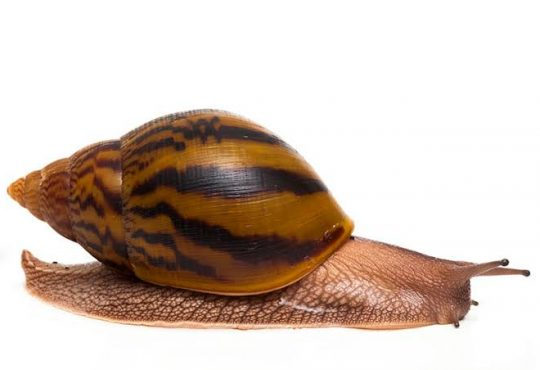 How to Start a Snail Farm in Nigeria