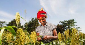 Youth Farm Lab Application